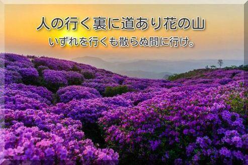 人の行く裏に道あり花の山 いずれを行くも散らぬ間に行けキャッチ画像