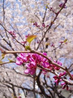 春!新しいことが始まる予感♪