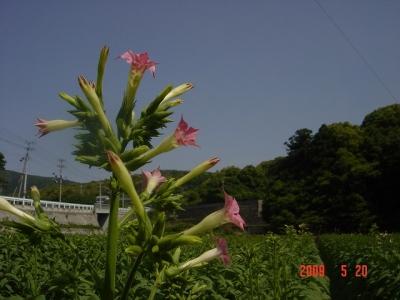 2009/05/20