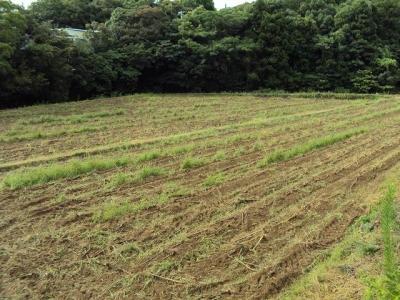 2009タバコ畑2