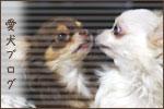 愛犬ブログランキング
