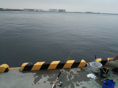 早朝から松阪港で釣り