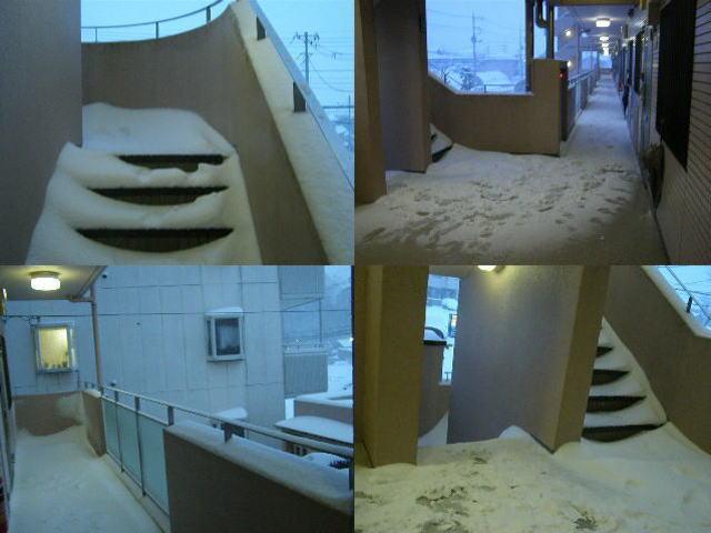snow140208.1