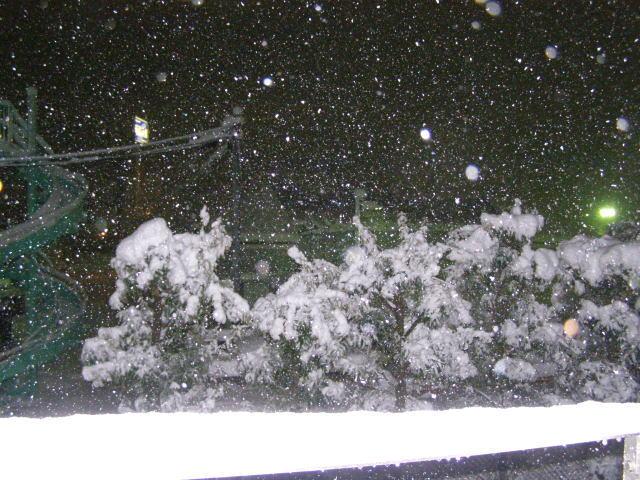 snow140214.3