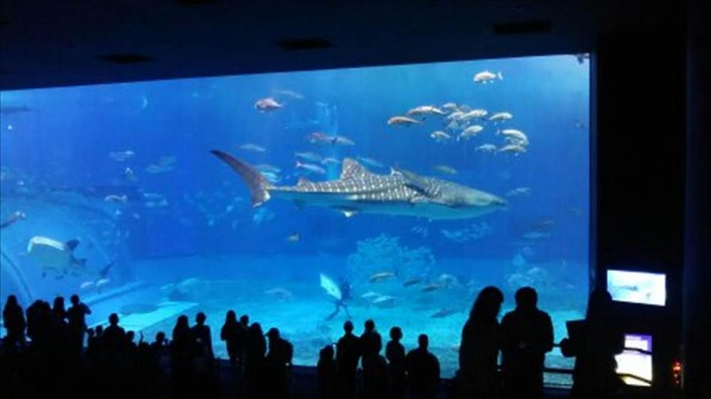沖縄県 沖縄美ら海水族館2_R.jpg