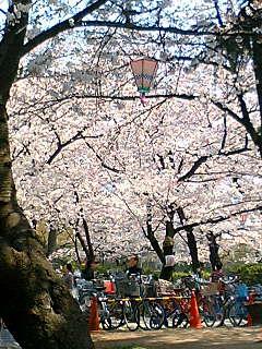 桜080402-1