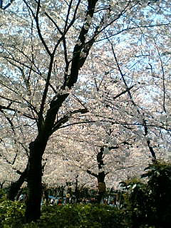 桜080402-2