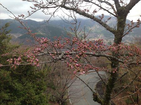 お部屋から見た山桜_R.JPG