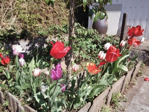 六音窯・窯開き花