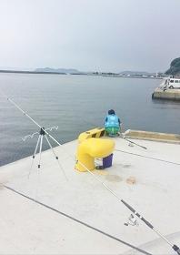 彼杵港岸壁 釣り