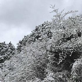 2020年初雪