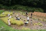釜沼北の稲刈り風景