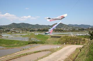 川代鯉ノボリ