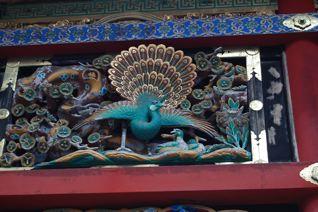 日光東照宮の孔雀