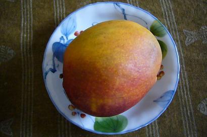 ブラジル産マンゴ