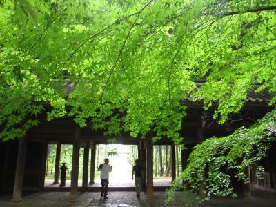 梅雨の曹源寺