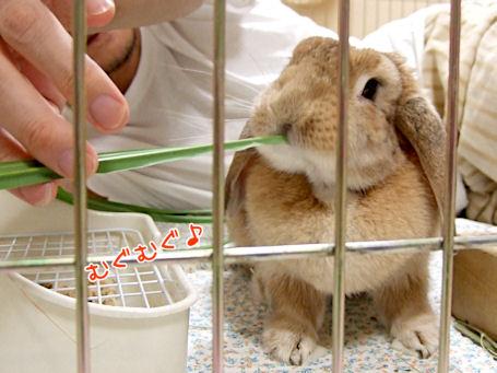 2008-08-03-oyabaka-01