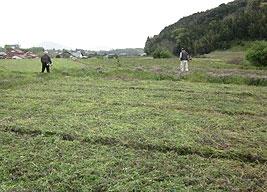 耕耘・草刈り2s.jpg