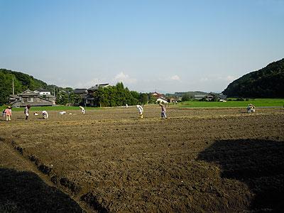 110716大豆畑s.jpg