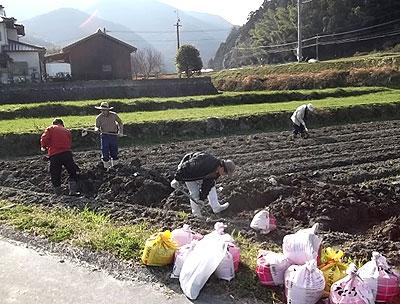 種芋を植える準備m.jpg