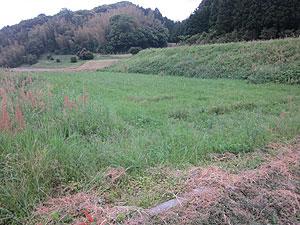 耕耘前の芋畑s.jpg