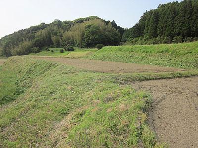 草刈り・畝立てが終った芋畑m.jpg