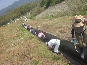 イモ畑下水路の清掃s.jpg
