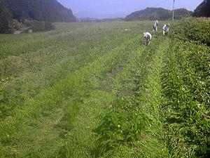 130807_093917大豆畑s.jpg
