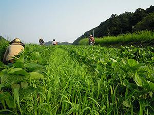 大豆畑4496.jpg
