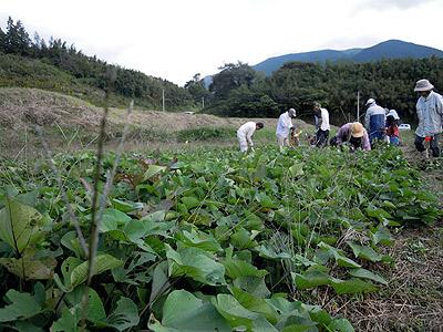 芋畑4799.jpg