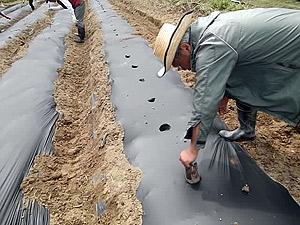 苗植え場所の穴掘りs.jpg
