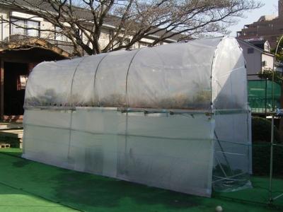 盆栽棚冬囲い