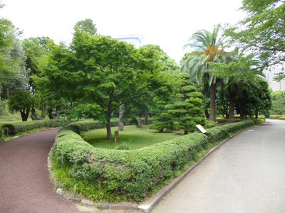 都道府県の木.jpg