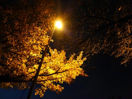 夜のいちょう.jpg
