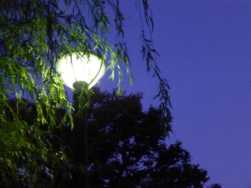 柳と明かり.jpg