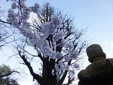 桜と灯籠.jpg