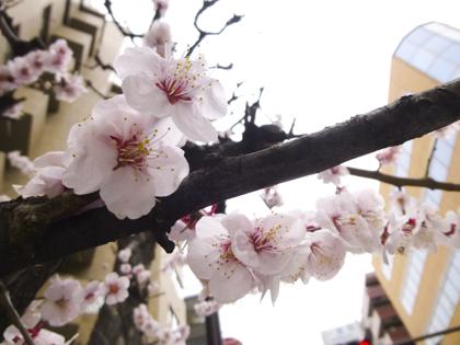 3月の花_1.JPG