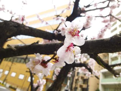 3月の花_2.JPG