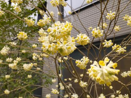 3月の花_3.JPG