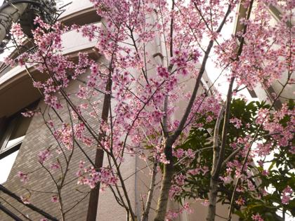 3月の花_4.JPG