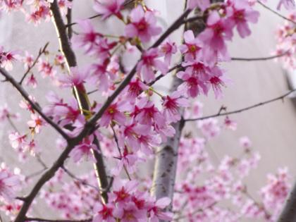 3月の花_5.JPG