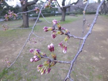 3月の花_17.JPG