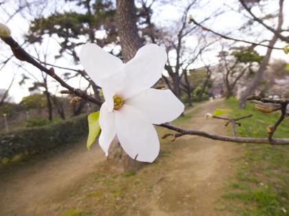 3月の花_18.JPG