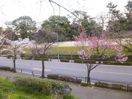 3月の花_19.JPG