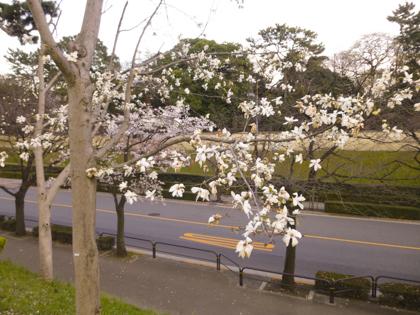 3月の花_20.JPG
