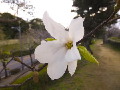 3月の花_21.JPG