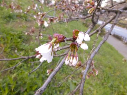 3月の花_22.JPG