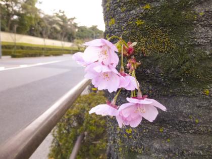 3月の花_23.JPG