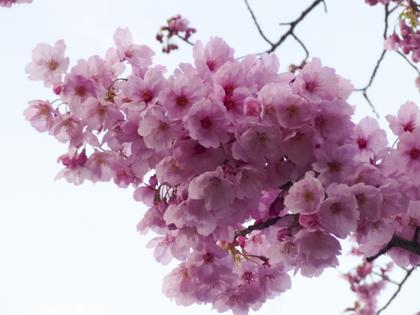 3月の花_24.JPG