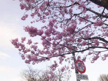 3月の花_26.JPG